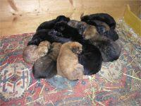02-13-Junge-Hunde