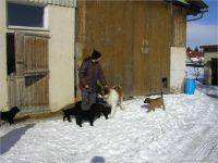 04-Hund-Katze-Hase