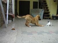09-Hund-Katze-Hase