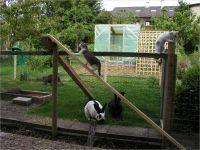 11-Hund-Katze-Hase