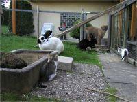 12-Hund-Katze-Hase