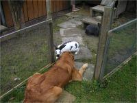 16-Hund-Katze-Hase
