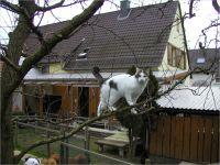 17-Hund-Katze-Hase