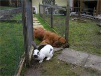 19-Hund-Katze-Hase