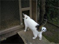 23-Hund-Katze-Hase