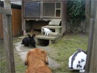 24-Hund-Katze-Hase