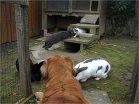 25-Hund-Katze-Hase