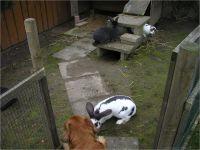 26-Hund-Katze-Hase