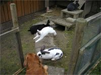 27-Hund-Katze-Hase