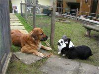 28-Hund-Katze-Hase