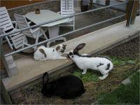 32-Hund-Katze-Hase