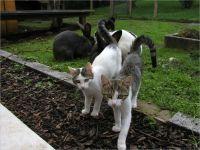 40-Hund-Katze-Hase
