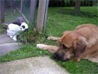 42-Hund-Katze-Hase