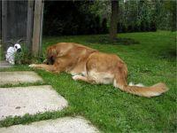 43-Hund-Katze-Hase