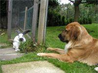 44-Hund-Katze-Hase