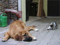 45-Hund-Katze-Hase