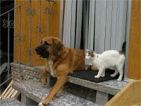 46-Hund-Katze-Hase