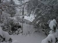 16-Vogel-Futtersilo-im-Schnee