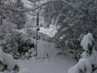 17-Vogel-Futtersilo-im-Schnee